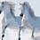 Thumbnail: Horse 08