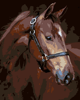 Brown Horse 02