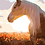 Thumbnail: Horse 03