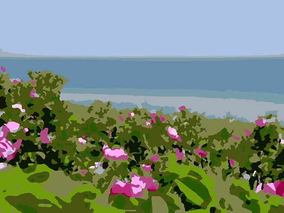 Beach Roses 02