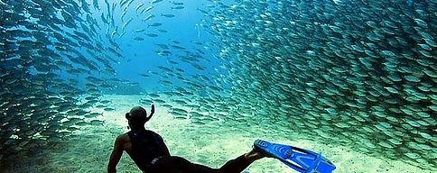 Sardines Run Moal Boal_edited.jpg