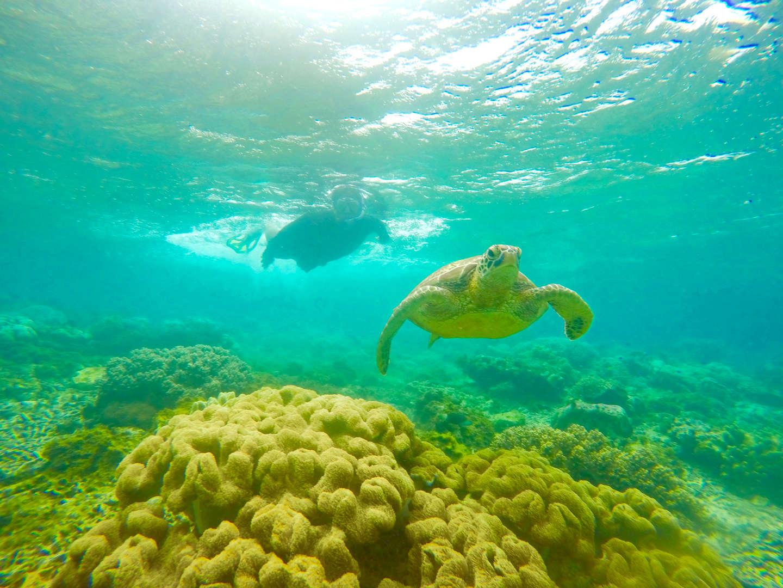 Apo Island_ DumaGetMe Tropic Tours
