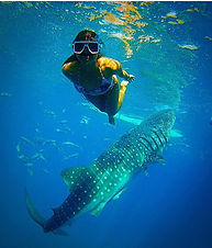 Oslob Swimming with the WhaleShark _ Dum