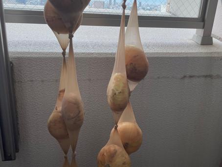画期的な玉ねぎの保存方法