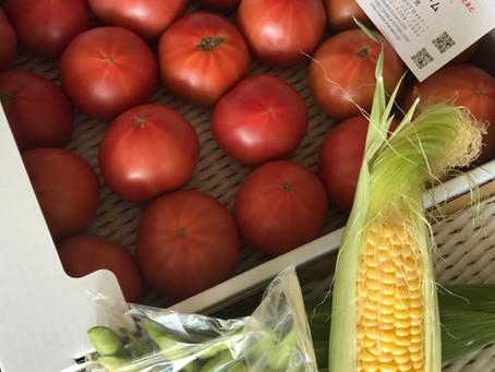 レイコの畑、さあ!!夏野菜が始動します。上田ファームさん