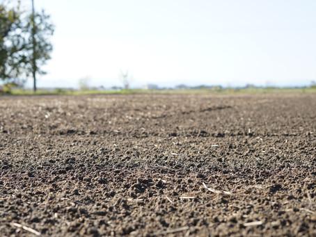 僕集小麦づくりプロジェクト2020~種まき