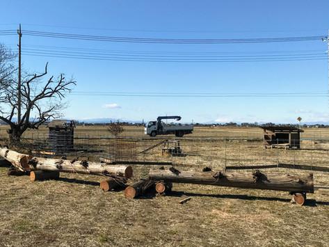思い出の木と巨大ベンチ