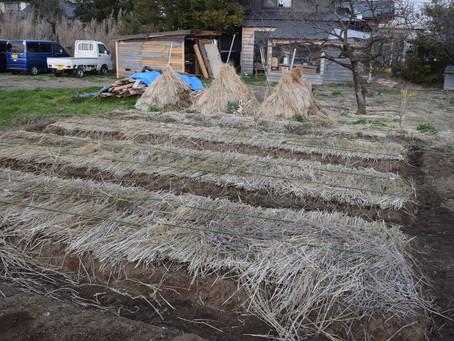 2019年菜園作りスタート~僕集菜園づくりプロジェクト~