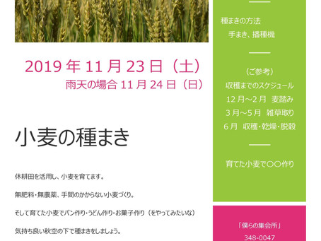 【イベント開催のお知らせ】小麦の種まき ~育てた小麦でうどんパーティー・パン作り目指して~