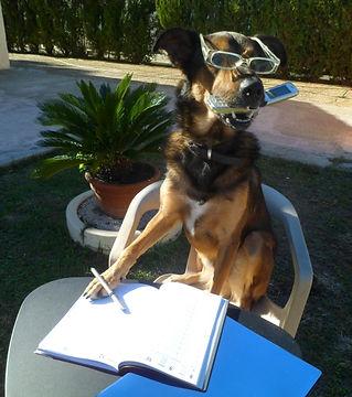 chien assis au bureau