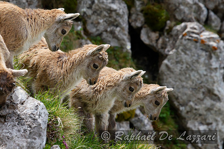 animaux-suisse-033.jpg