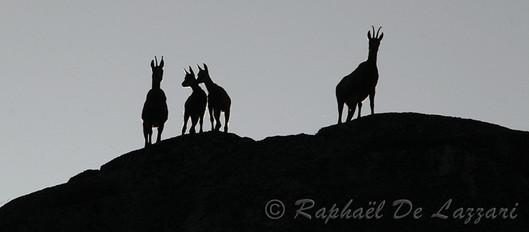 animaux-suisse-012.jpg
