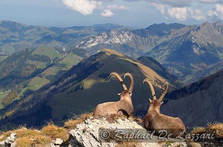 animaux-suisse-006.jpg