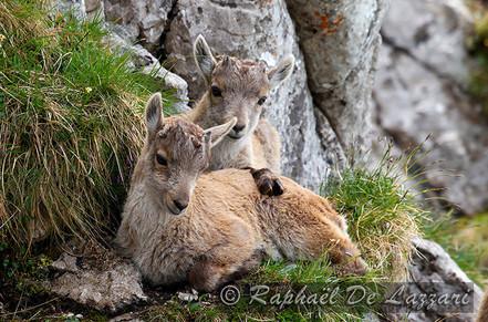 animaux-suisse-032.jpg