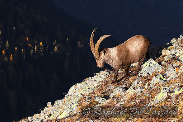 animaux-suisse-021.jpg