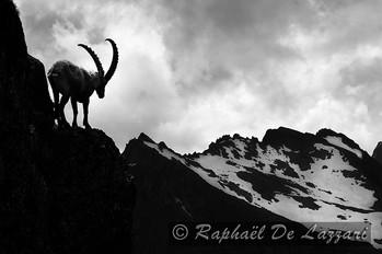 animaux-suisse-014.jpg