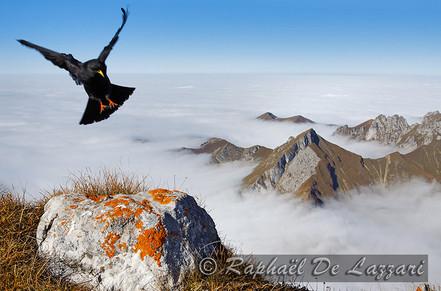 animaux-suisse-018.jpg