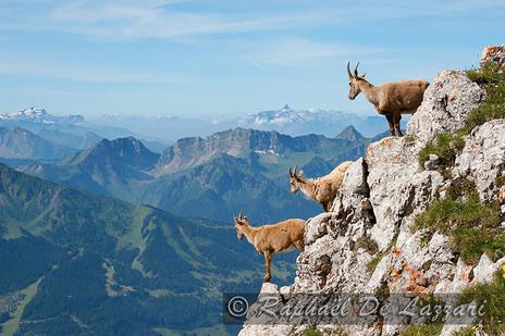 animaux-suisse-031.jpg