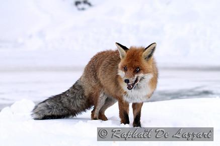 animaux-suisse-017.jpg