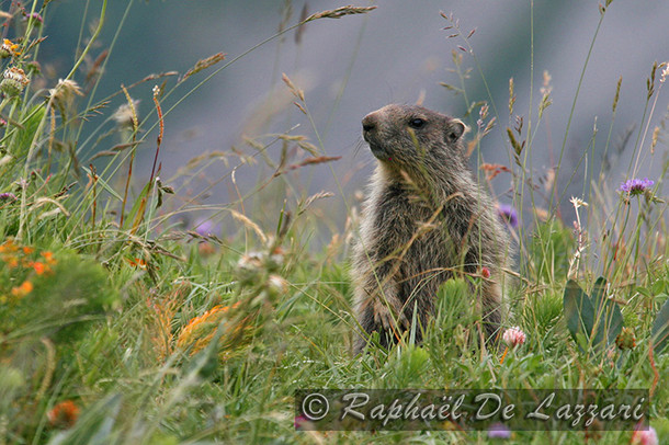 animaux-suisse-025.jpg