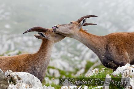 animaux-suisse-019.jpg