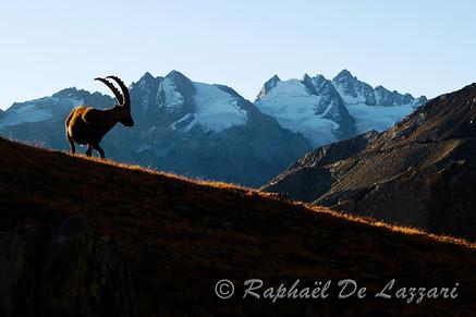 animaux-suisse-011.jpg