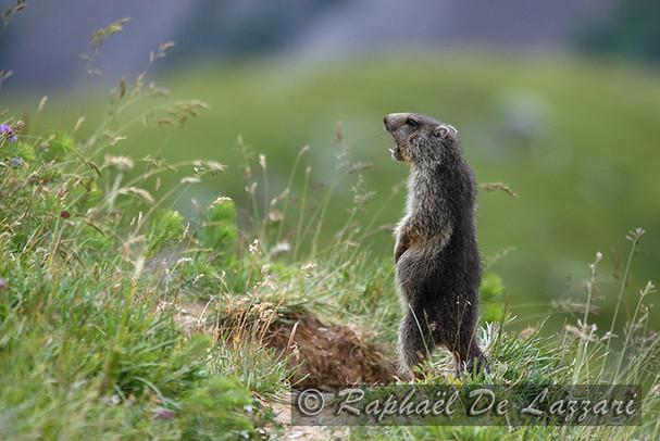 animaux-suisse-027.jpg
