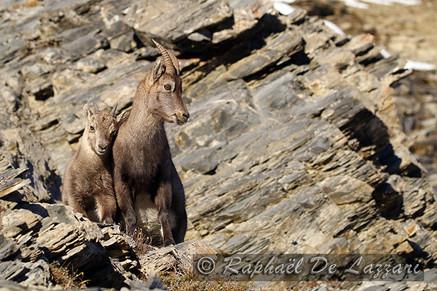 animaux-suisse-023.jpg