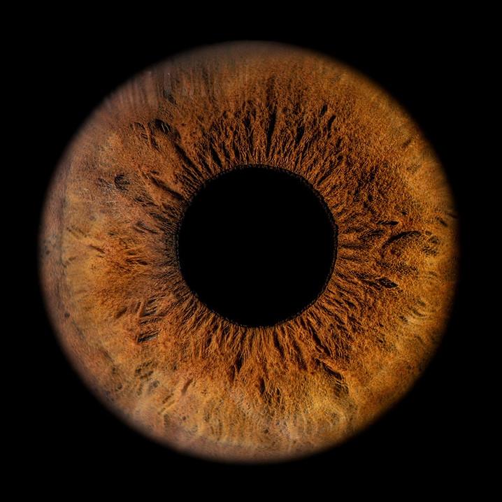 Braunes Auge - Makroaufnahme des menschlichen Auges