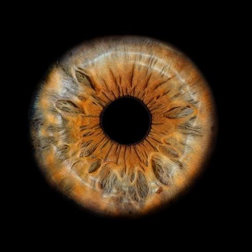 Braune orange graue Iris auf schwarzem Hintergrund