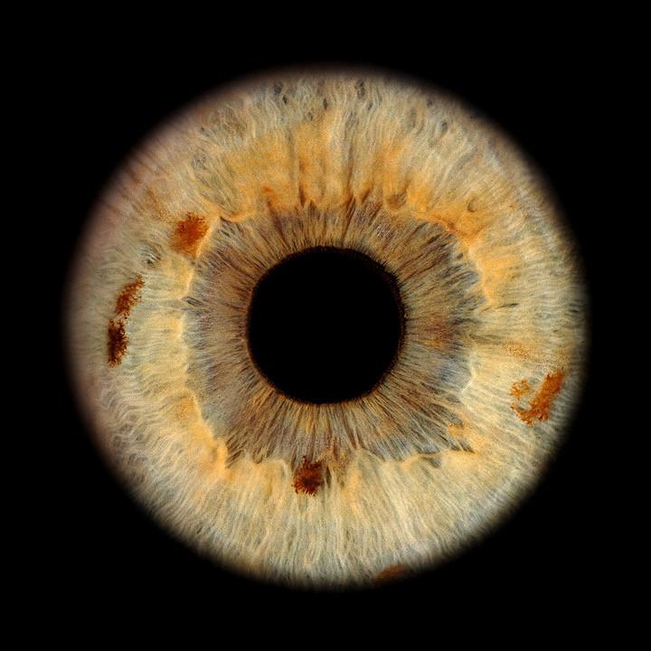 Einzelne Iris mit wortwörtlicher Regenbogenhaut