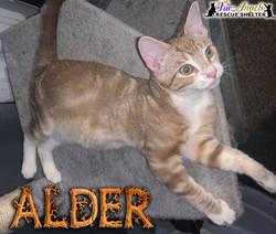 Alder1