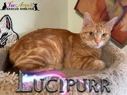 Lucipurr
