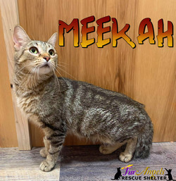 Meekah
