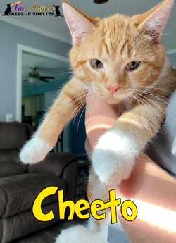 Cheeto1