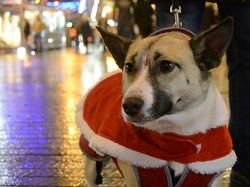 Cork City Centre At Christmas