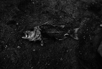 Рыбья чешуя умирающей России.
