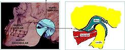 Tratamiento Disfunción ATM. Tratamiento Bruxismo. Tratamiento Dolor Facial. Tratamiento Dolor Craneo-Mandibular.