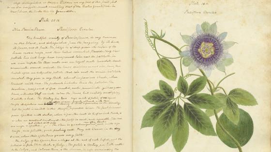 A Forgotten Botanist