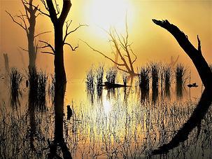 Swamp Waken, Gary Hodge copy.jpg