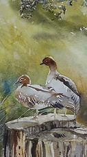 ducks on tree stump 2.jpeg