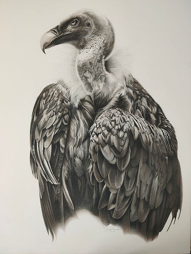 Nature's Undertaker by Sonja Bowden copy.jpg