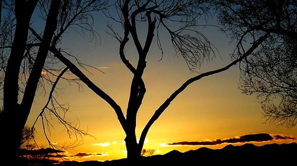 inspiring sunset through trees