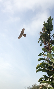 inspirational bird soaring