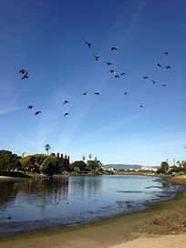 birds in flt over lagoon.JPG