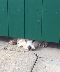 help wanted - dog under gate