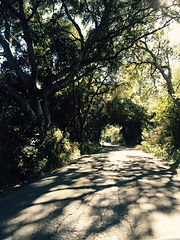 journey - country road tree tunnel