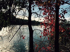 late afternoon lake through trees