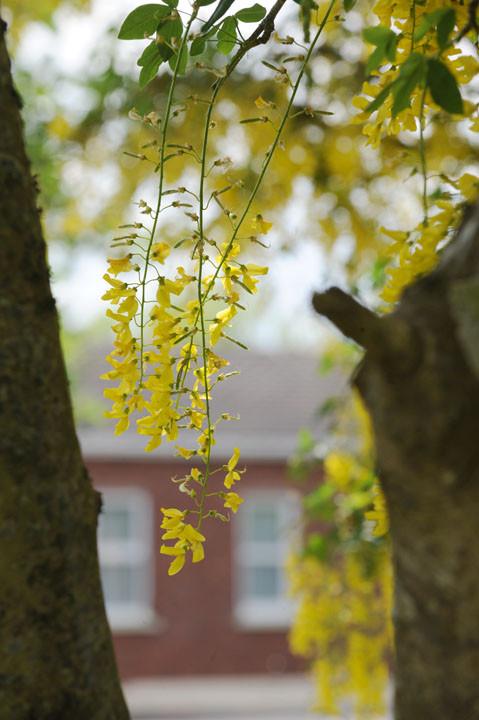 St Kyrans through the trees.jpg