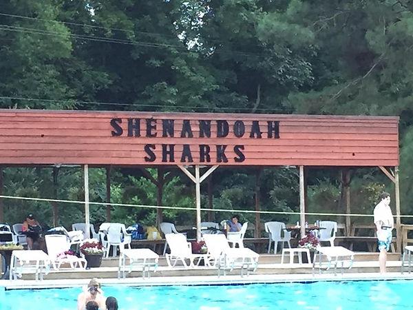 ShenandoahSharks.jpg